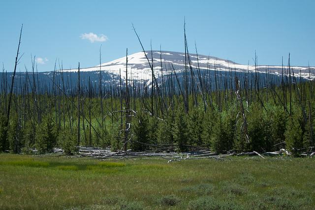 Leidy Peak