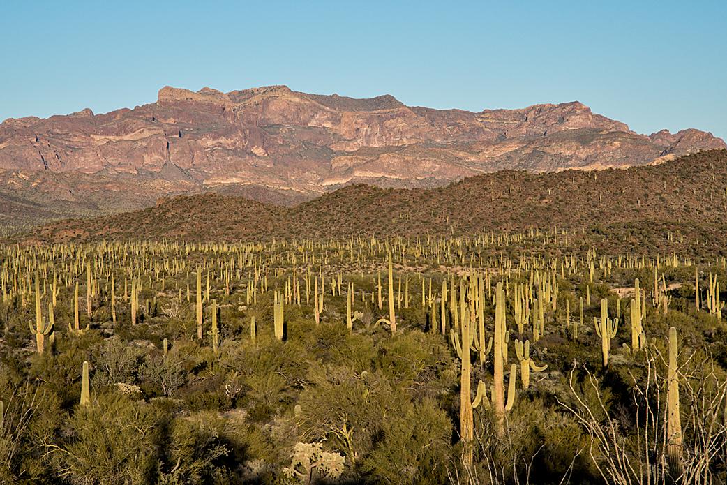 04 Organ Pipe Cactus National Monument.jpg