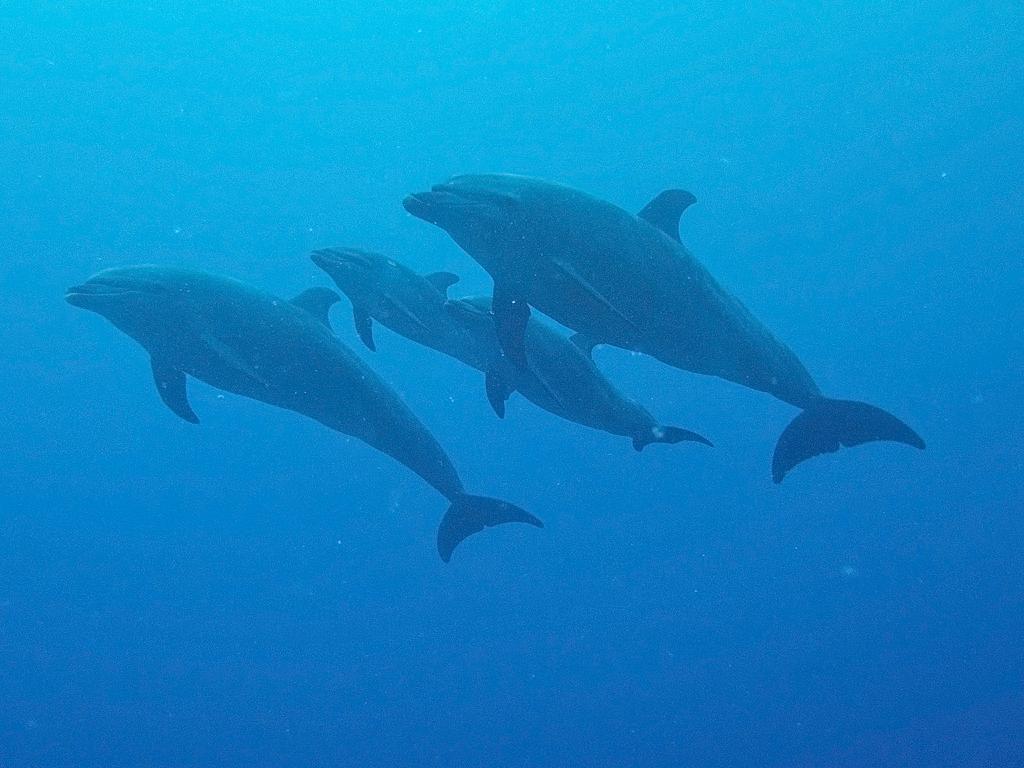 06 spinner dolphins.jpg