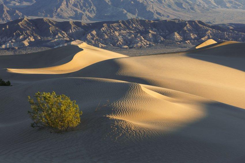 11.18.16 Mesquite Dunes Early Sunrise.jpg