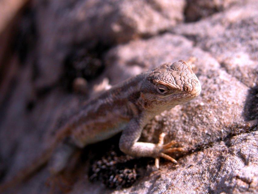 110_lizard.jpg