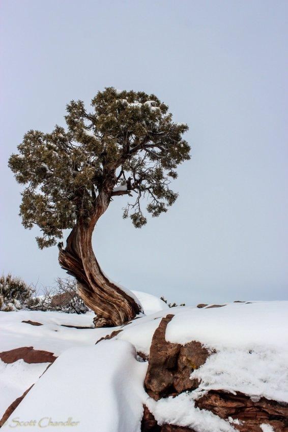 12-15 Snow-8.jpg
