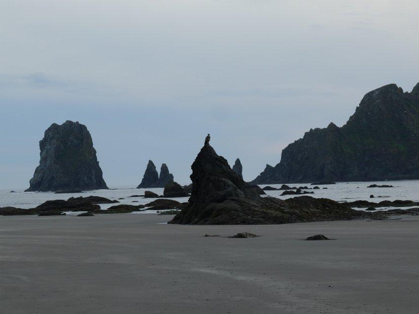 2015-06-18 olympic coast 1044.JPG