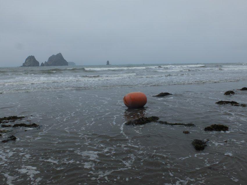 2015-06-18 olympic coast 504.JPG