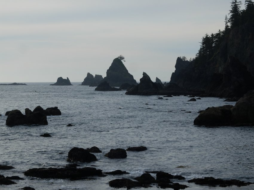 2015-06-18 olympic coast 843.JPG