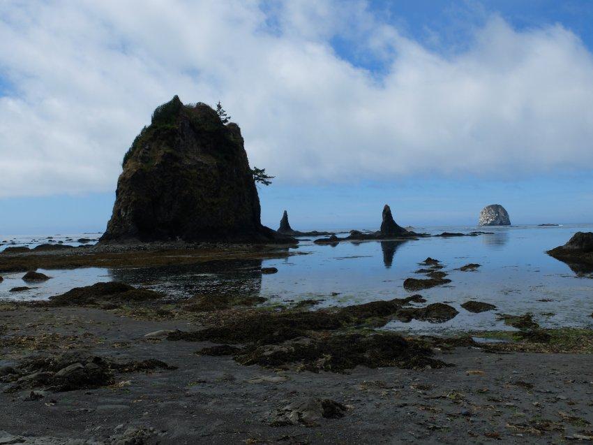 2015-06-18 olympic coast 940.JPG