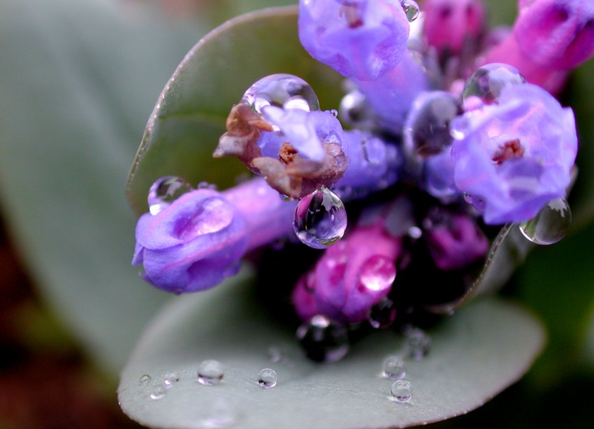 26_water-droplets_wildflowers.jpg