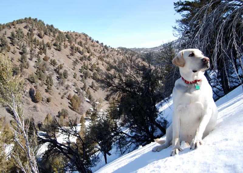 35_shed-hunten-dog_max-on-snow.jpg