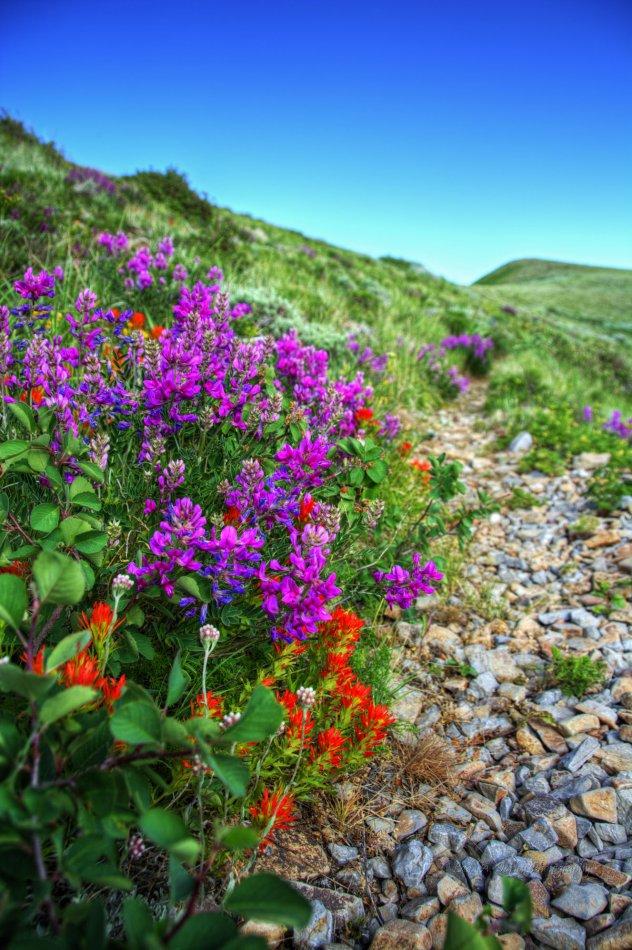 39_HDR-wildflowers_trail.jpg