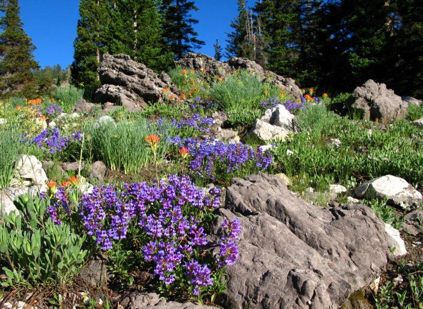 4592 - White Pine Lake - Wild Flowers.JPG