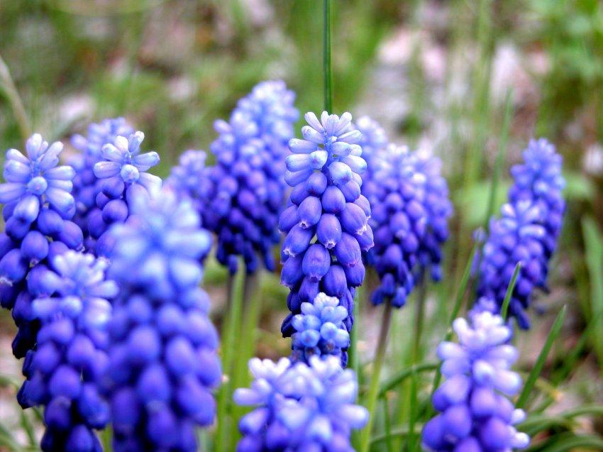 46_wildflowers.jpg