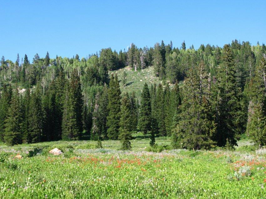 4727 - White Pine Lake.jpg