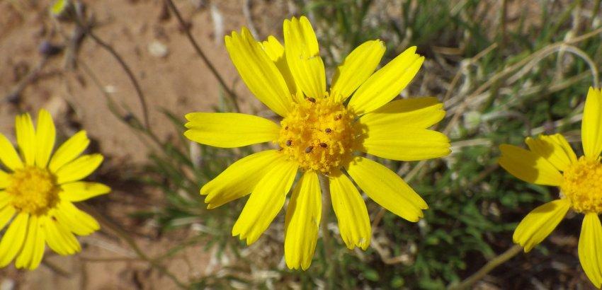 48_FlowerBugs.jpg