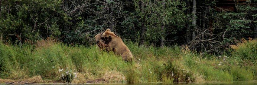 7.23 Bears-13.jpg