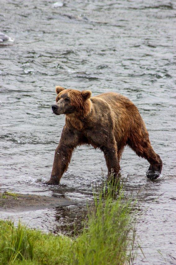 7.6 Bears-108.jpg