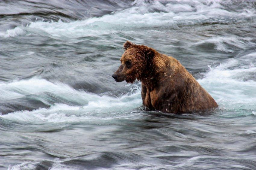7.6 Bears-2.jpg
