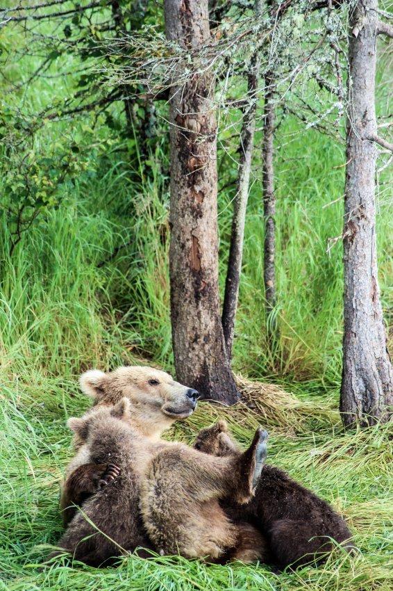 7.7 Bears-4.jpg