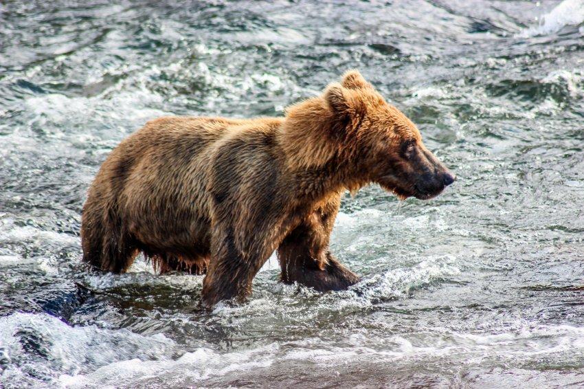 7.7 Bears-44.jpg