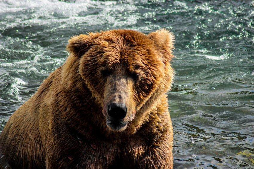 7.7 Bears-86.jpg