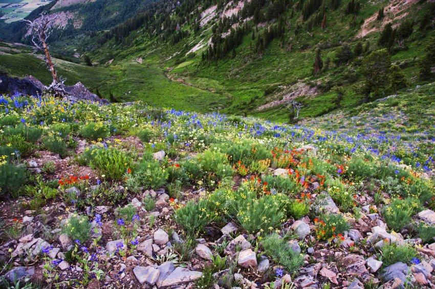 72_shumway-canyon_wildflowers_25%.jpg