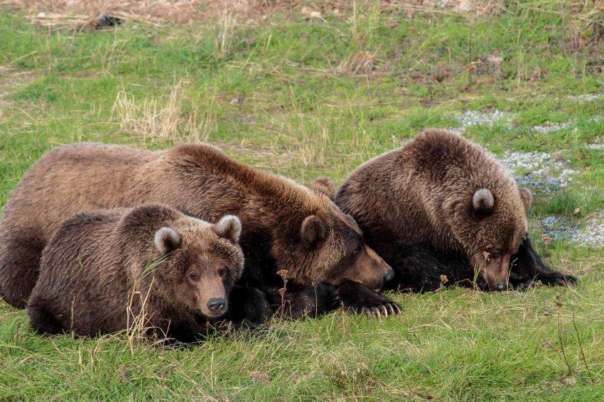 9.16 Work Bears-69.jpg