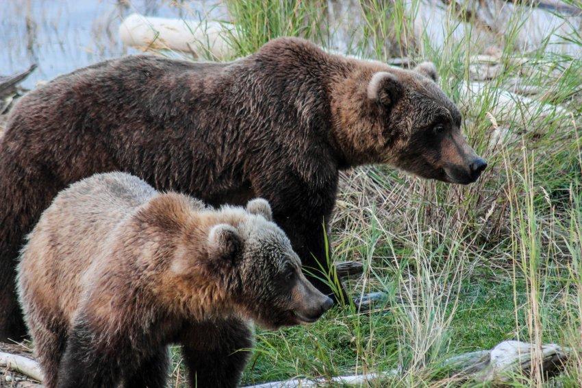 9.16 Work Bears-72.jpg