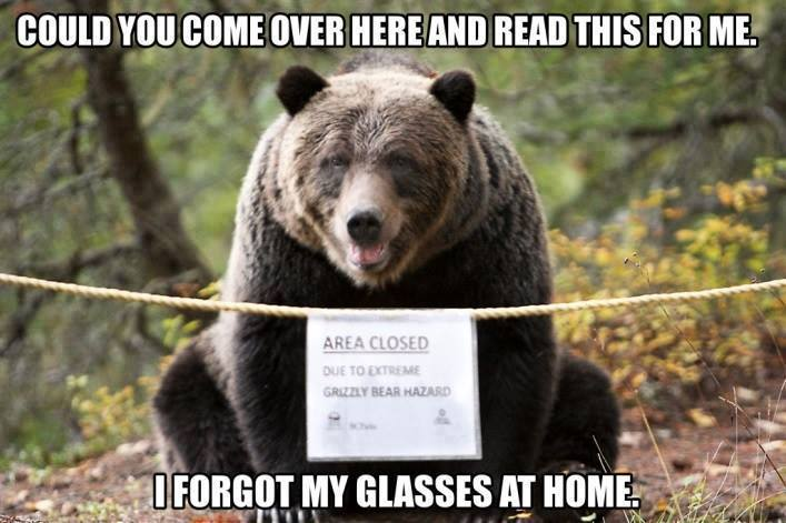 A bear.jpg