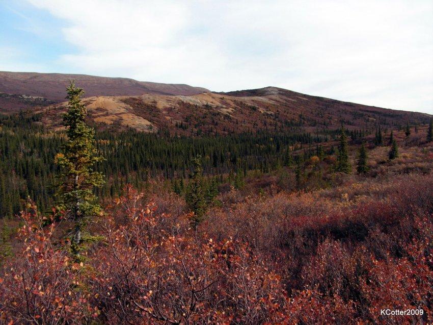 Alaska 2009 155.jpg