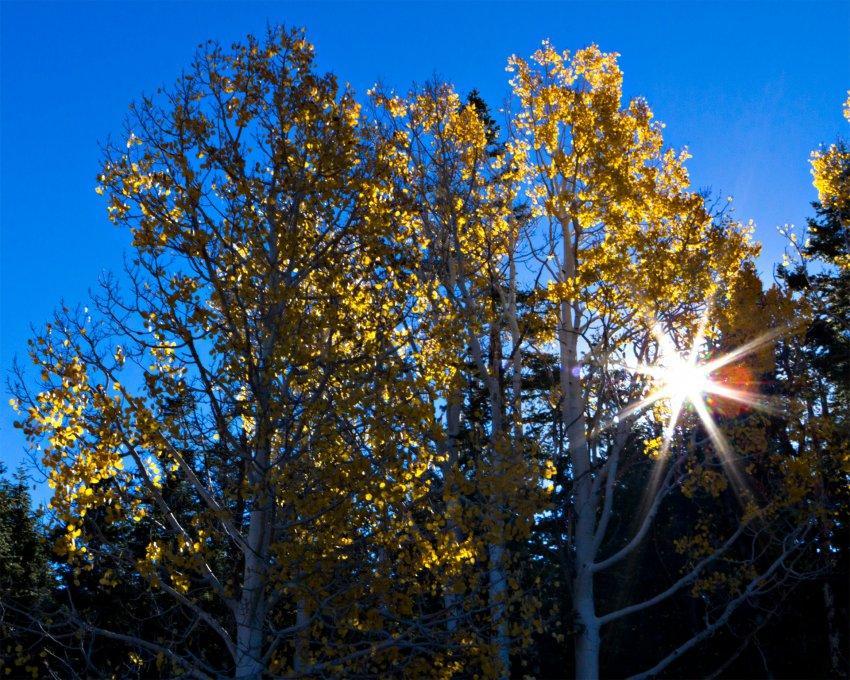 Aspen Sunburst.jpg