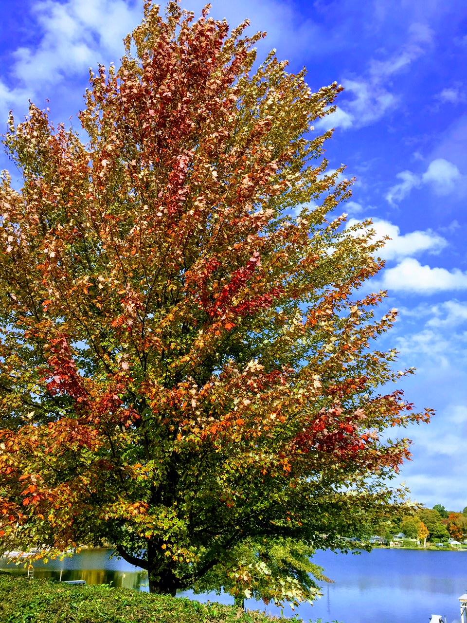 Autumn blaze-IMG_2059.jpg