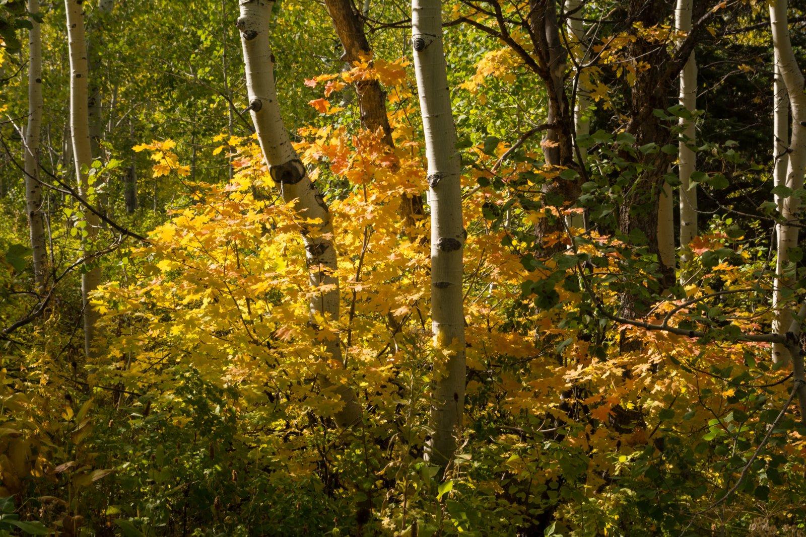 Autumn Primrose 10-20190003.jpg