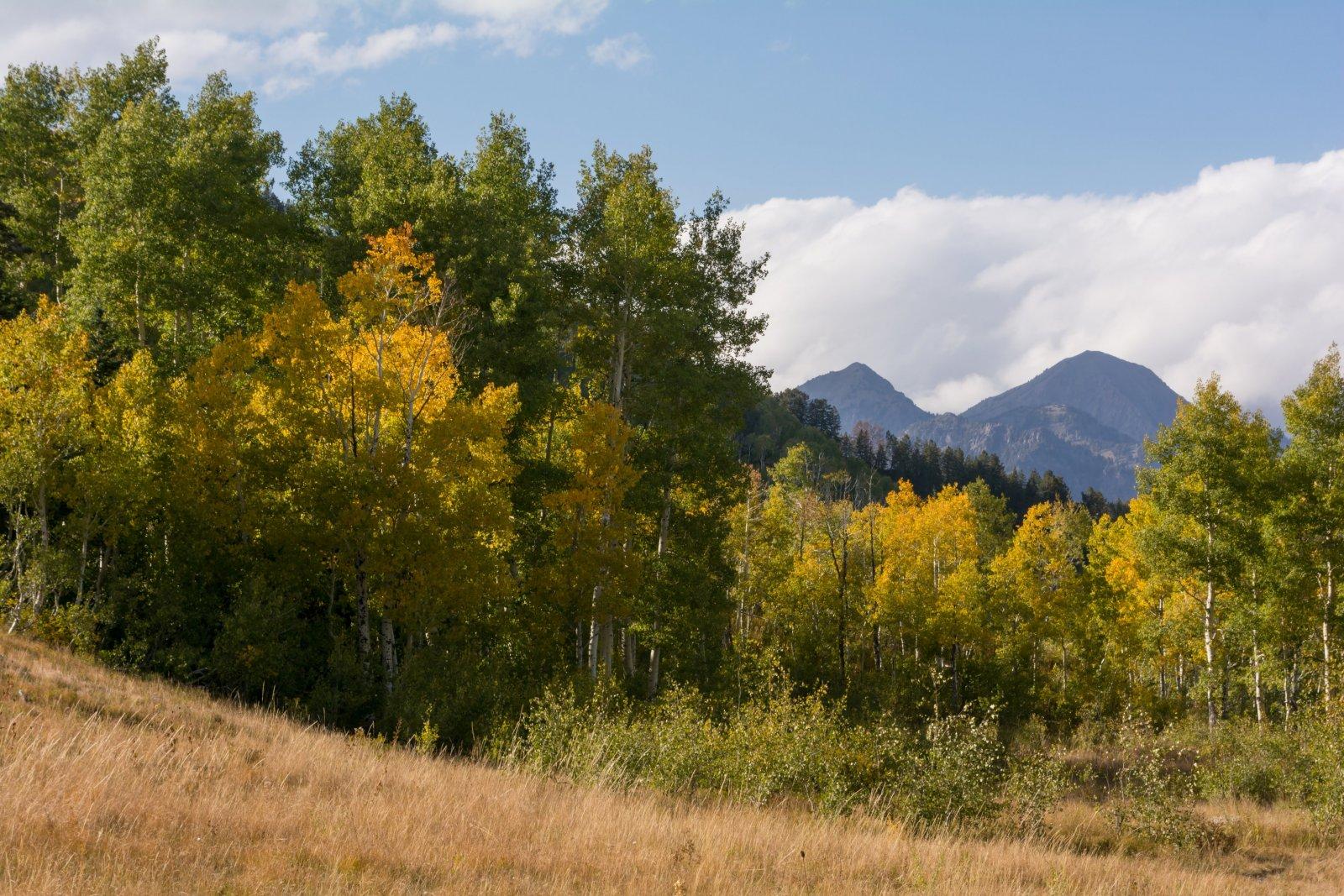 Autumn Primrose 10-20190028.jpg
