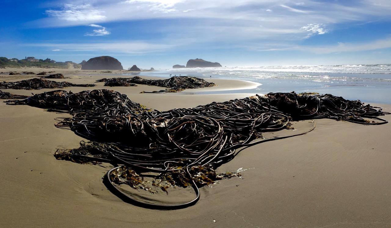 Bandon beach-IMG_3469.jpeg
