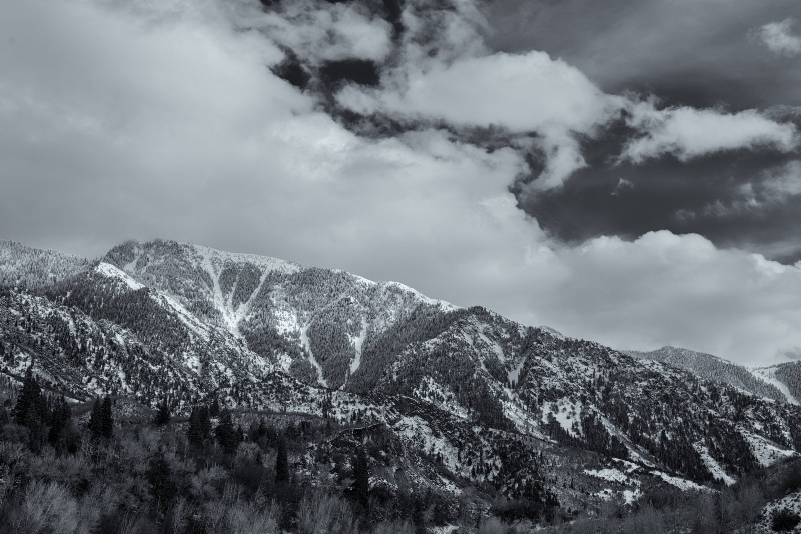 Bell Canyon Thurs 4-20190041-bw.jpg