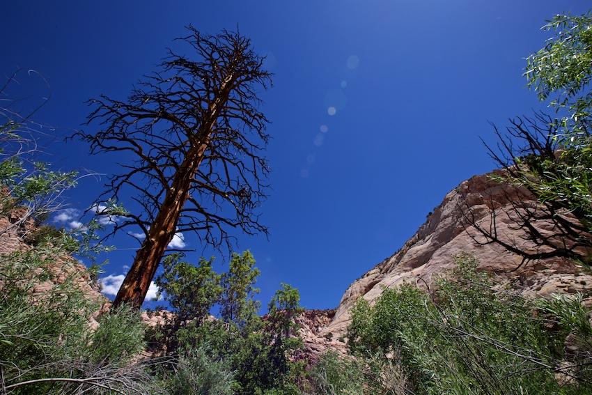 boulder-creek-escalante-12.jpg