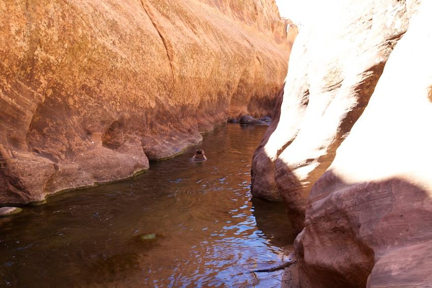 boulder-creek-escalante-28.jpg