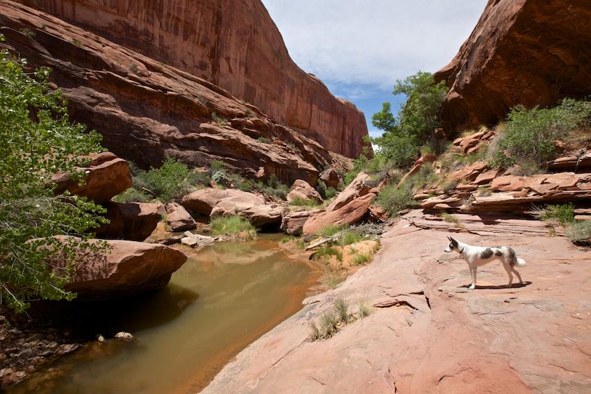bowns-canyon-22.jpg