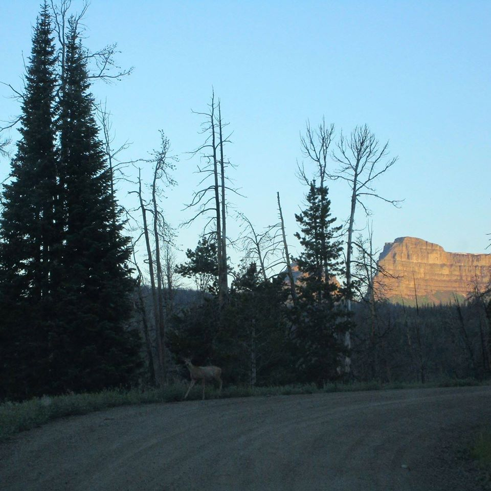 Brooks Lake road.jpg