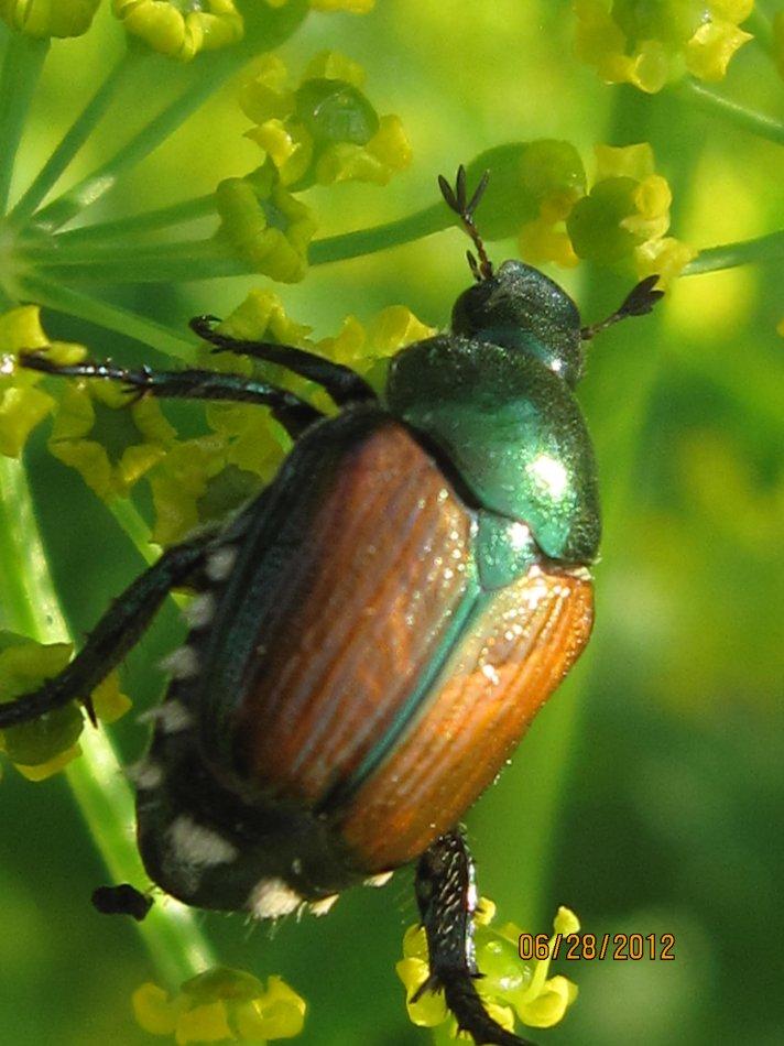 Bugs, G Ross Park 005.JPG