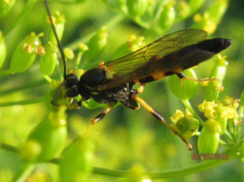 Bugs, G Ross Park 014.JPG