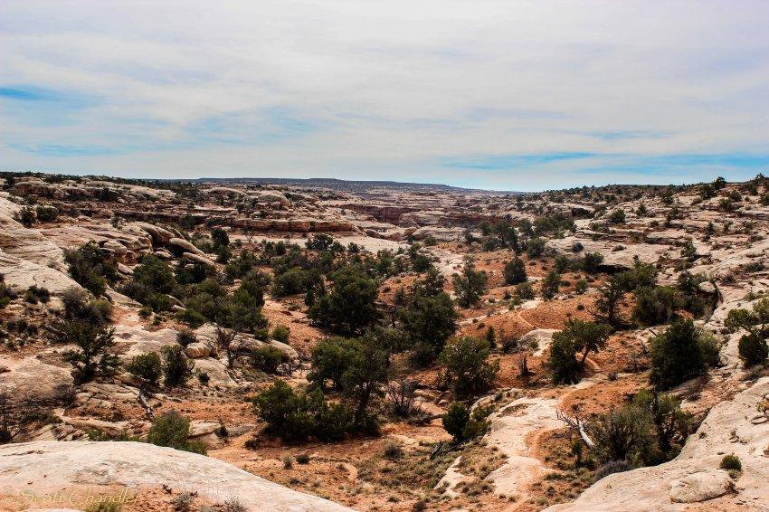 Cedar Mesa-175.jpg