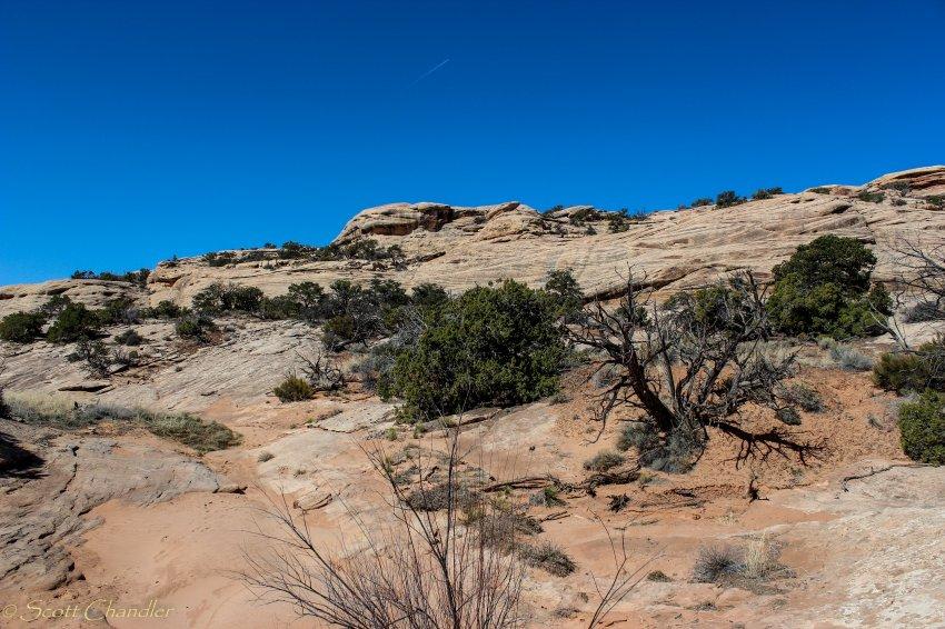 Cedar Mesa-68.jpg