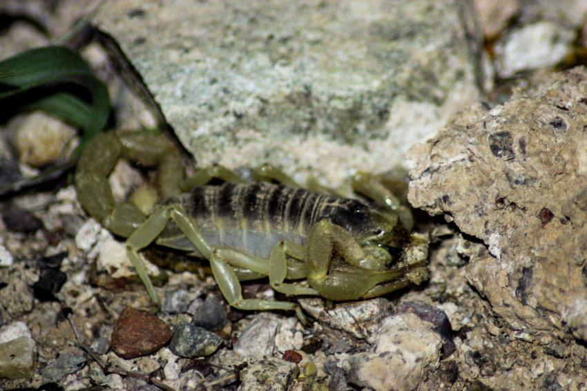 Critter Hunt-46.jpg