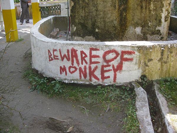 darjeeling-013a.jpg