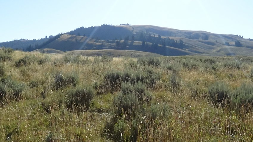 Day 1 A4 A Hills On Lamar Valley.JPG