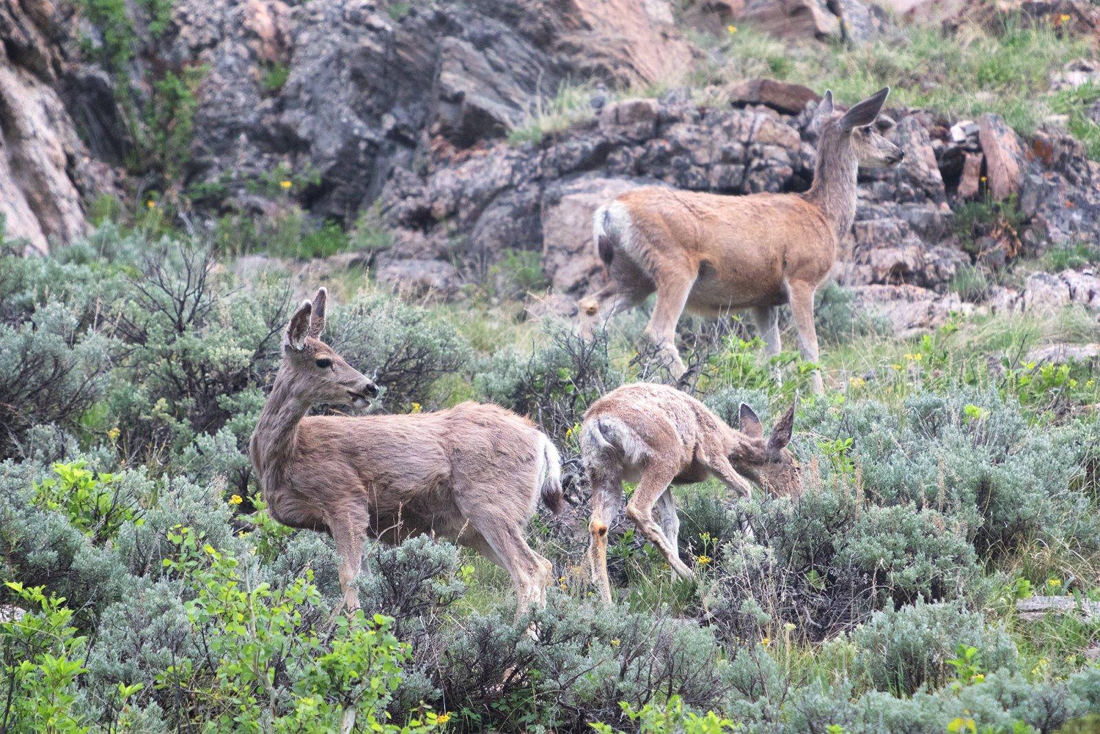 deer.and.babies.jpg