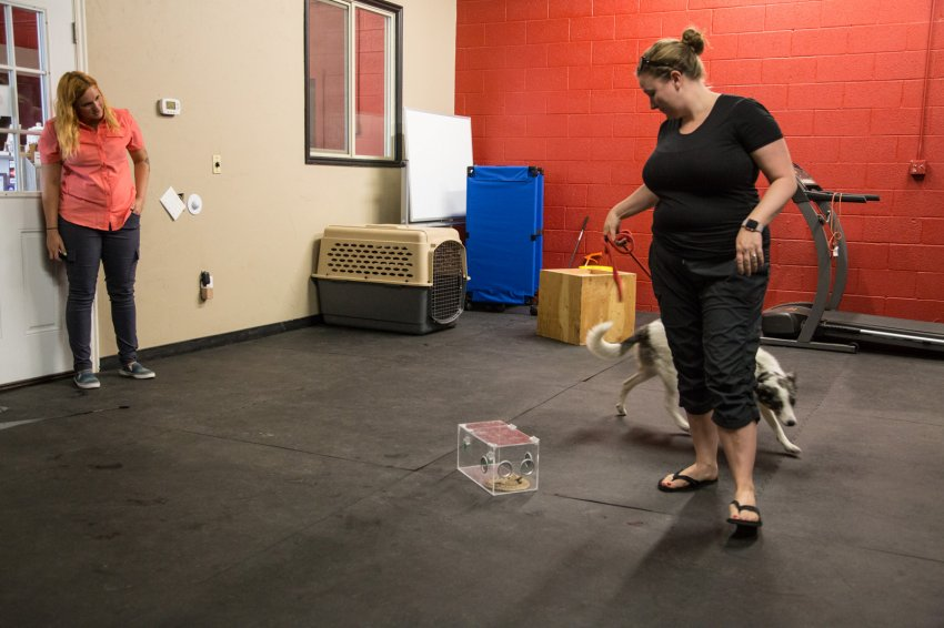 dog-rattlesnake-training-10.jpg