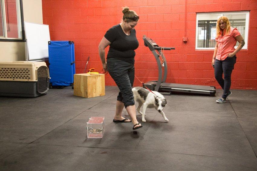dog-rattlesnake-training-11.jpg