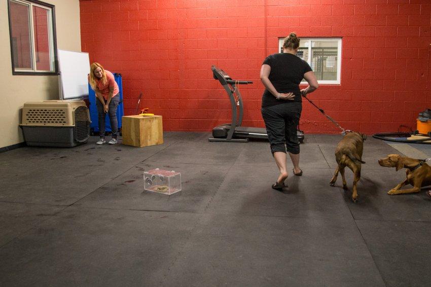 dog-rattlesnake-training-14.jpg