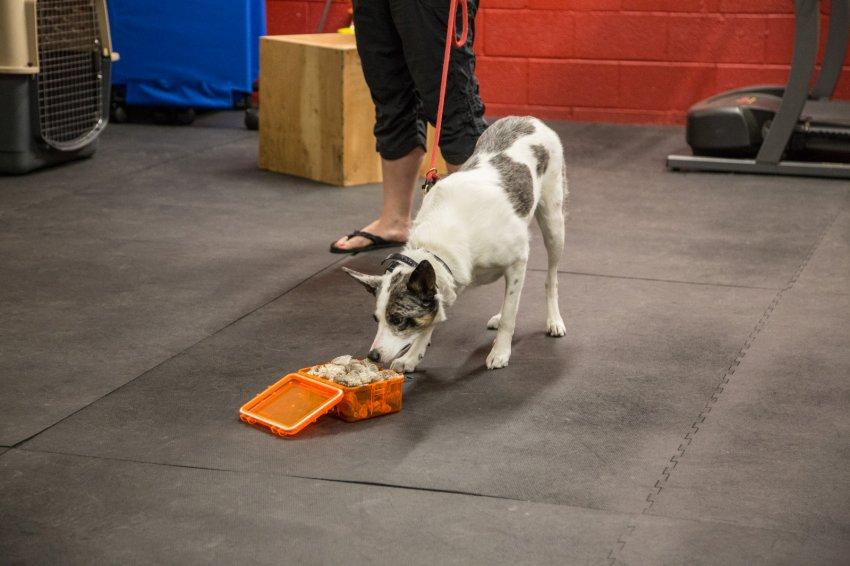 dog-rattlesnake-training-3.jpg